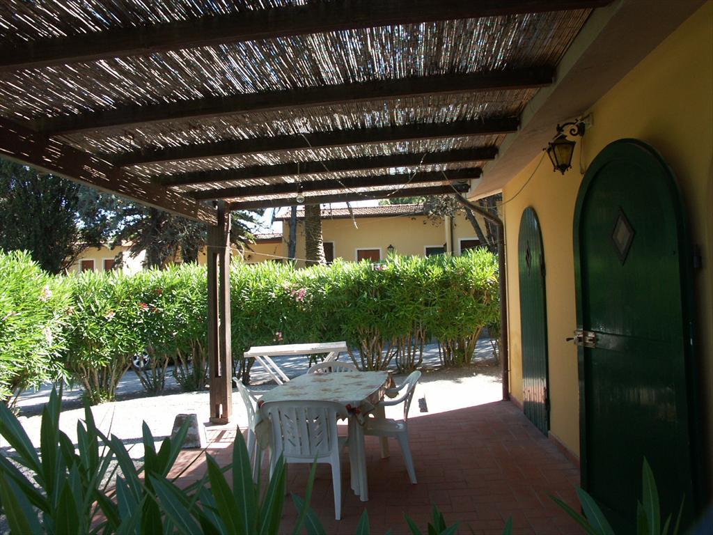 palme fr wohnung winterharte palmen fr den balkon yucca. Black Bedroom Furniture Sets. Home Design Ideas